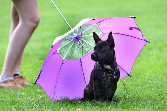 专题:狗狗的品质生活